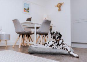 DogFriendlyAccommodation